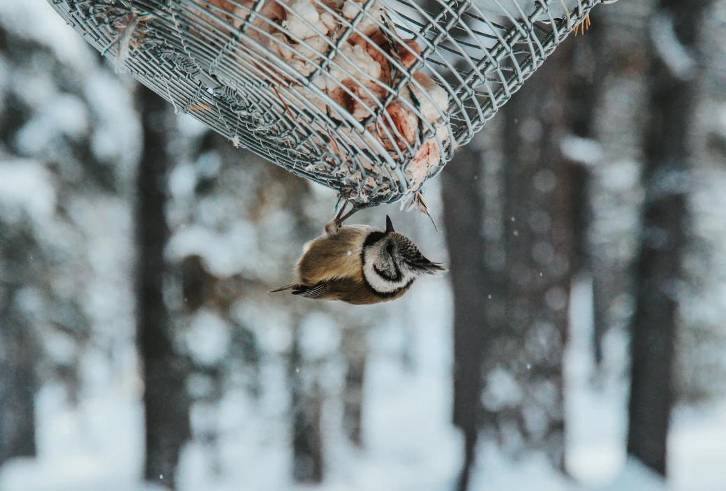 Comedero pájaros nieve