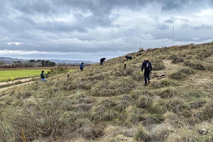 Reforestar con voluntarios en Villamanrique de Tajo